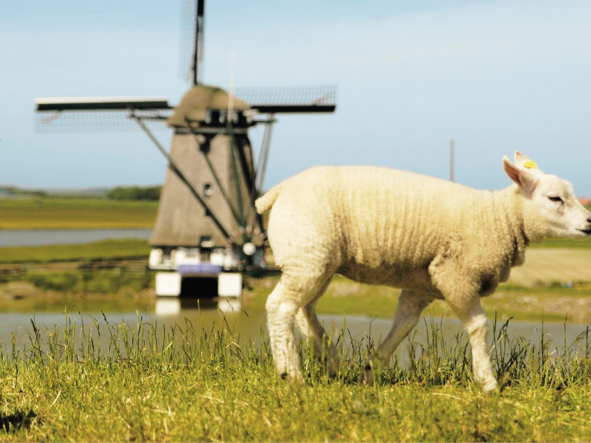 Ungewöhnlich Ferienhaus Küche Wohnzimmer Combo Ideen - Ideen Für Die ...